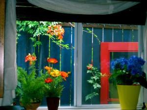 kitchen-window