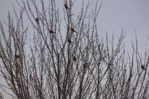 Birds-February